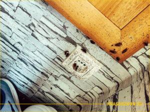 Розетка на кухне на которой сидят тараканы